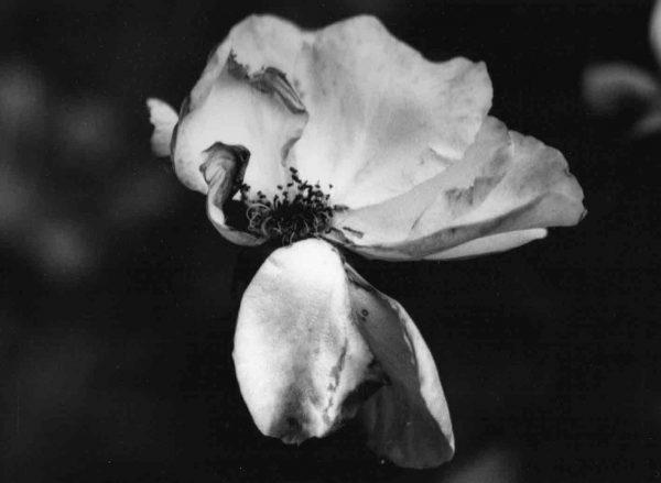 Flora VI, photographie de Danielle E Cerki